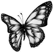 fjäril.jpg